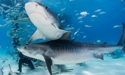 En EEUU muere una joven luego de ser atacada por tiburones