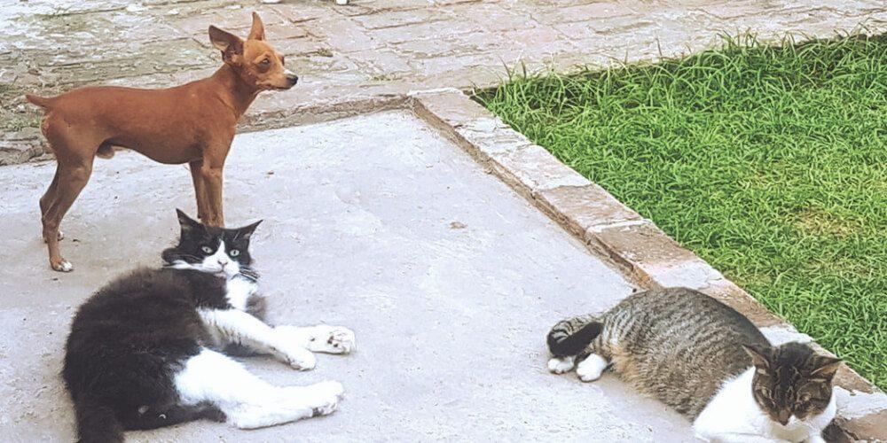 la-asombrosa-historia-de-la-dama-de-los-cuarenta-y-ocho-gatos-lilian-movidatuy.com