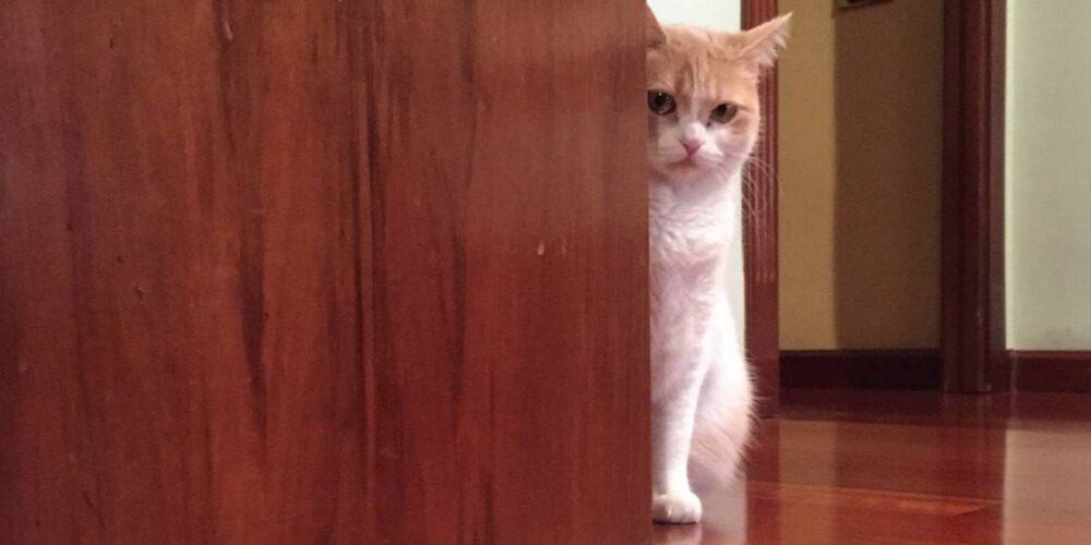 ✌ Esta gata tiene cinco formas para atacar puertas prohibidas ✌