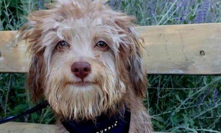 😮 Adorable: Nori es el perro que tiene rostro y sonrisa de humano 😮