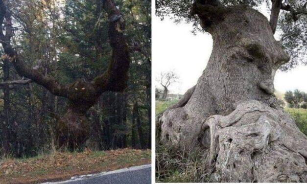 😮 Los 6 árboles con formas extrañas que resultan aterradores 😮