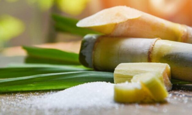 😮 Venezuela: la importación desmedida de azúcar afecta a cañicultores 😮