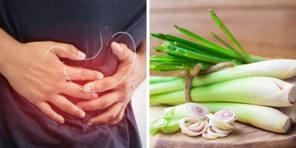 beneficios-del-malojillo-accion-digestiva-salud-movidatuy.com