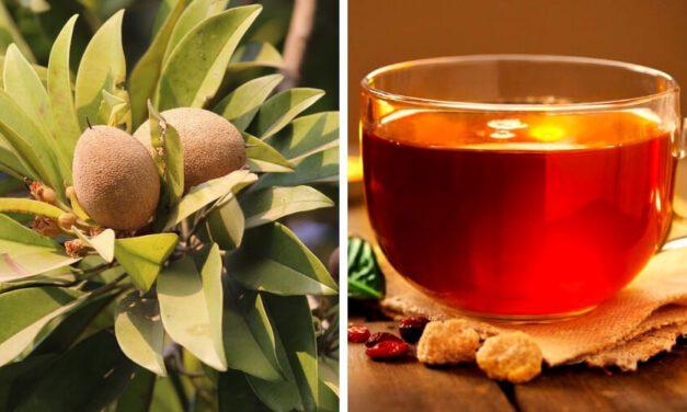 🍃 Infusión de hojas de Níspero: Limpia los riñones, combate la diabetes y regula la presión arterial 🍃