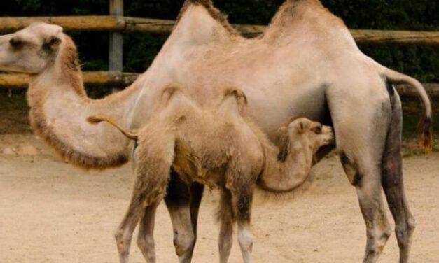 ✌ La reproducción de animales aumenta en un zoológico de Rusia ✌