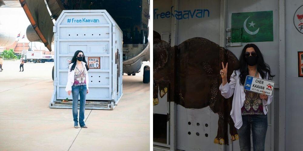 cher-viajo-hasta-pakistan-para-conocer-al-elefante-mas-solitario-del-mundo-traslado-kavaan-movidatuy.com