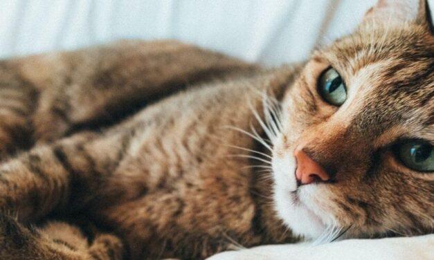 ✌️ Condenan a 3 meses de cárcel para hombre autista que agredió a 7 gatos ✌️