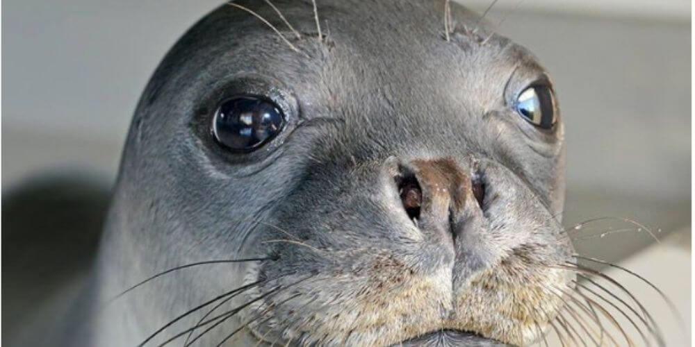 👎 Kostis falleció por un arpón, era la foca mascota de la isla griega de Alonissos 👎
