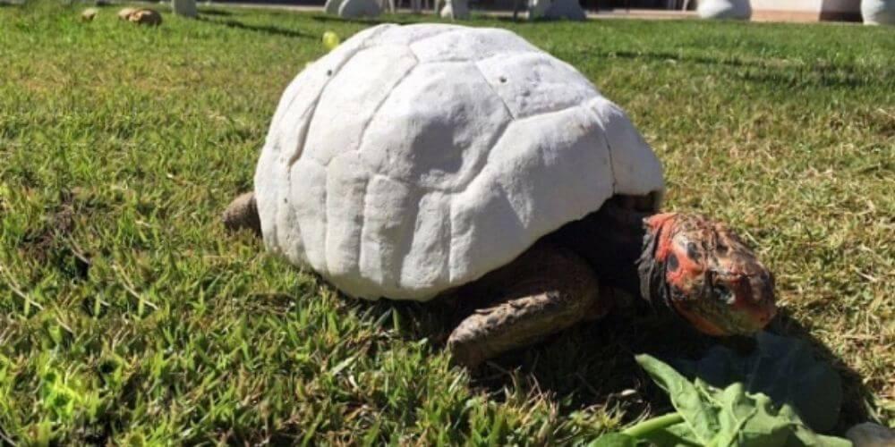 ✌️ Adorable tortuga recibió el primer caparazón del mundo impreso en 3D ✌️