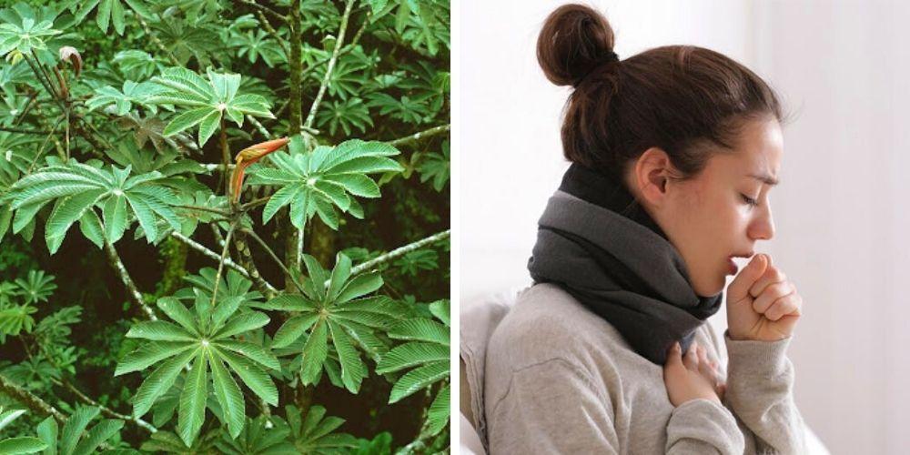 ambay-planta-argentina-para-problemas-respiratorios-y-mucho-mas-internacionales-movidatuy.com