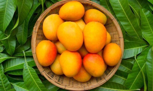 ✅ ¿Para qué sirve el té de hojas de mango? Beneficios que te sorprenderán ✅